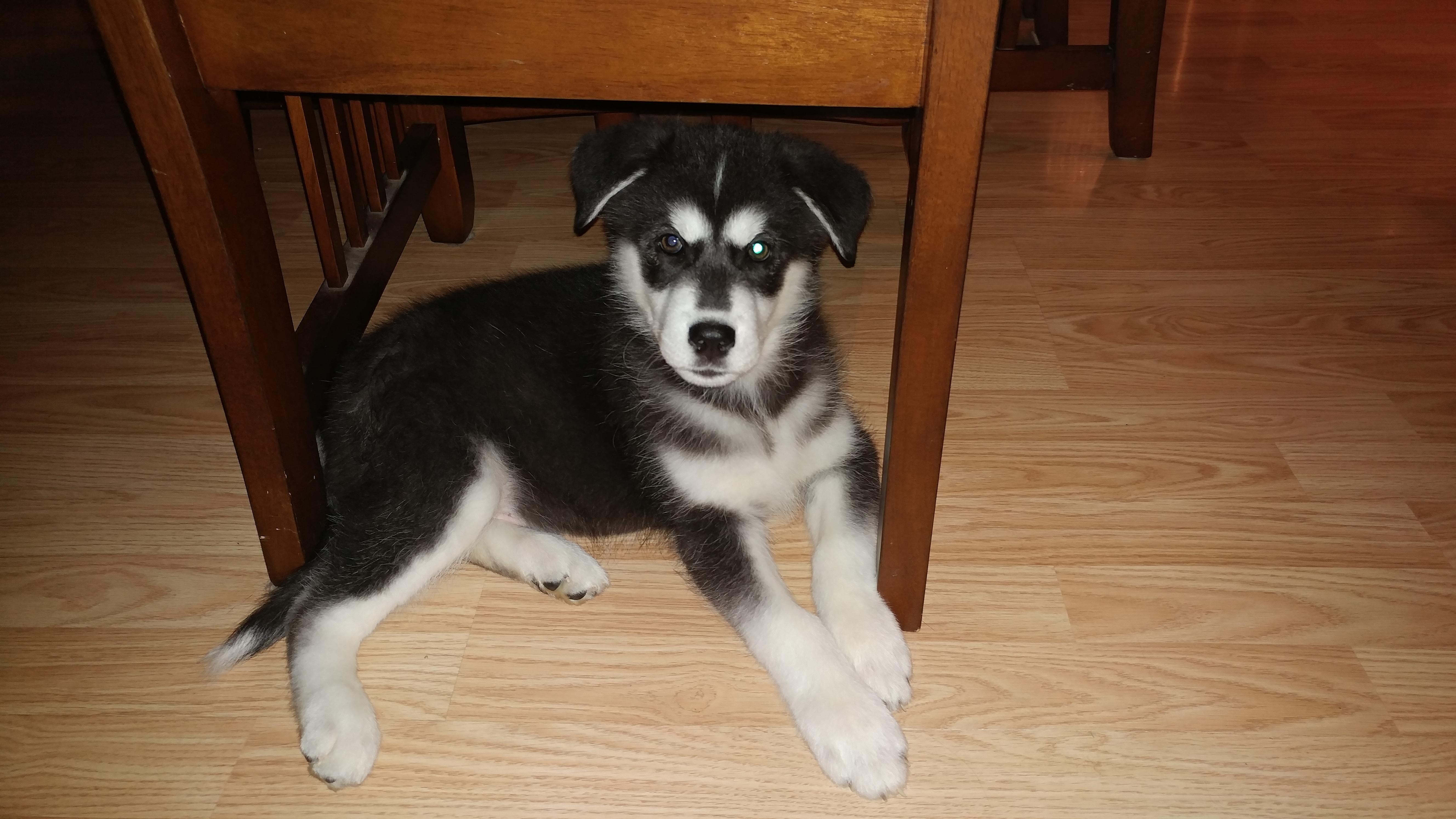 My newest good boy. Meet Rokket http//ift.tt/2zNzJvq