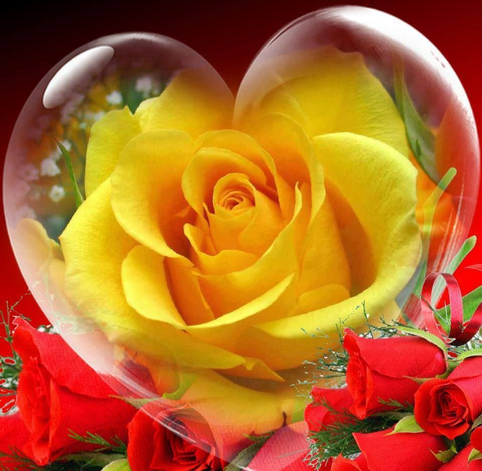 Romancing the Rose...Yellow Rose Heart...By Artist Unknown