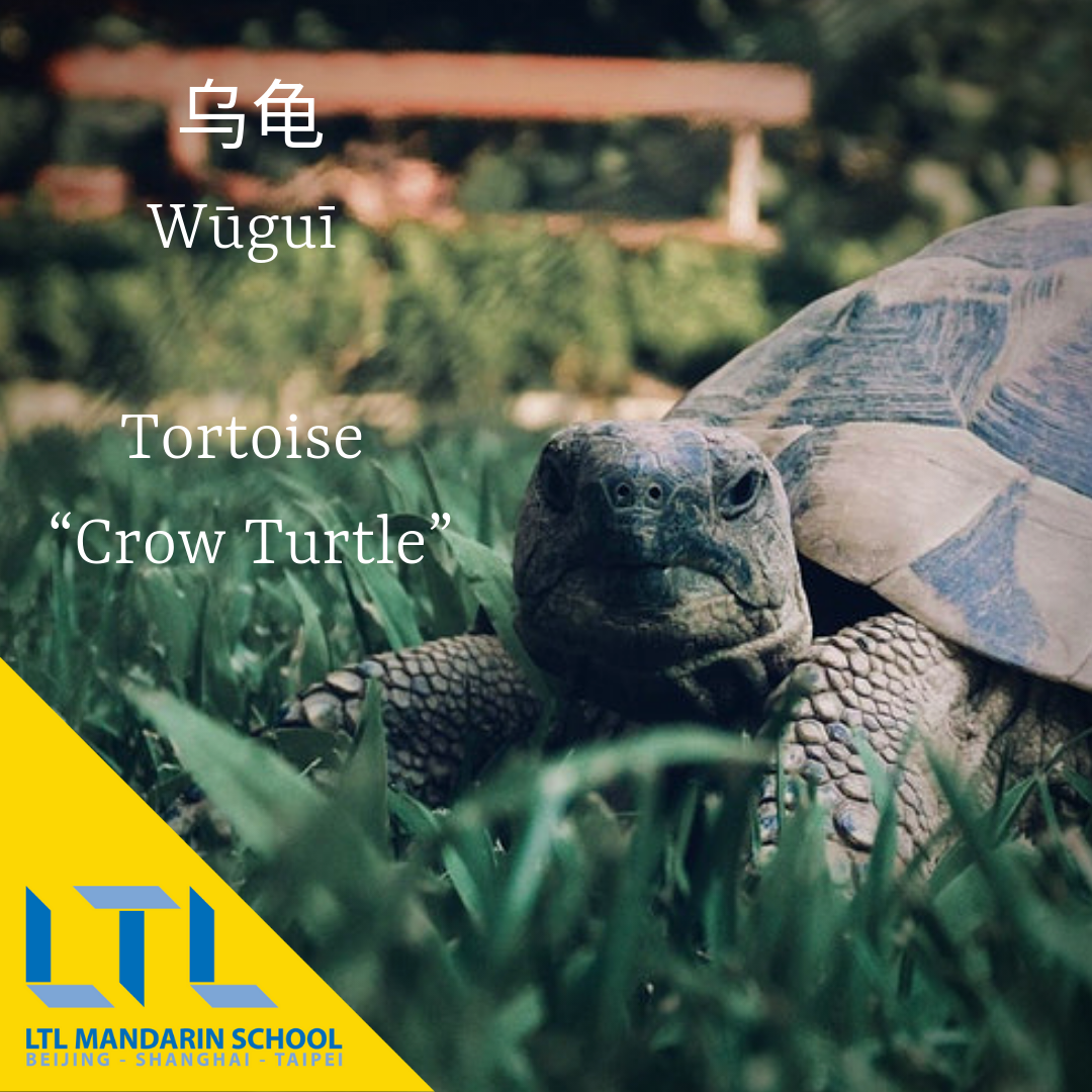 Animal Names in Chinese | Plants & Animals in Chinese