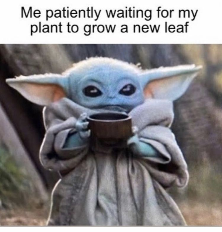 Baby Yoda Plant Leaf In 2020 Yoda Funny Yoda Meme Star Wars Memes