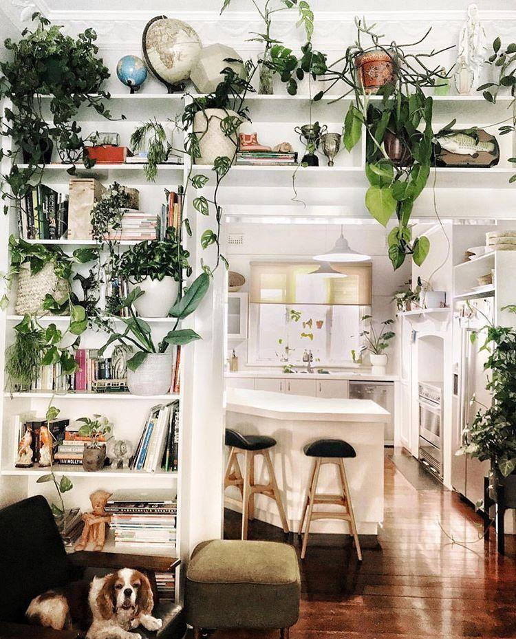 I Plant Even Iplanteven Instagram Photos And Videos Home