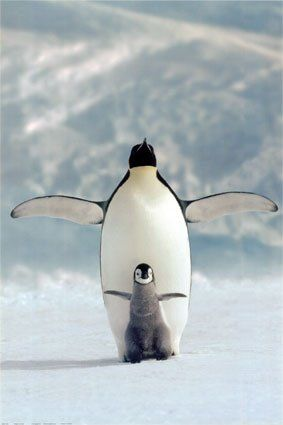 I'm the king of the world! Penguins
