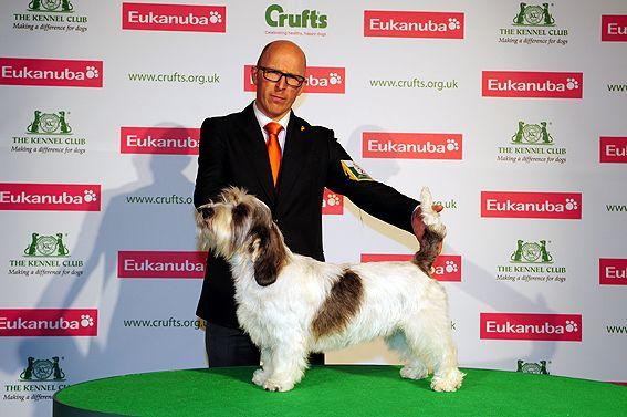 The Crufts Winner 2013 A Bassett Griffon Vendeen Petit Named