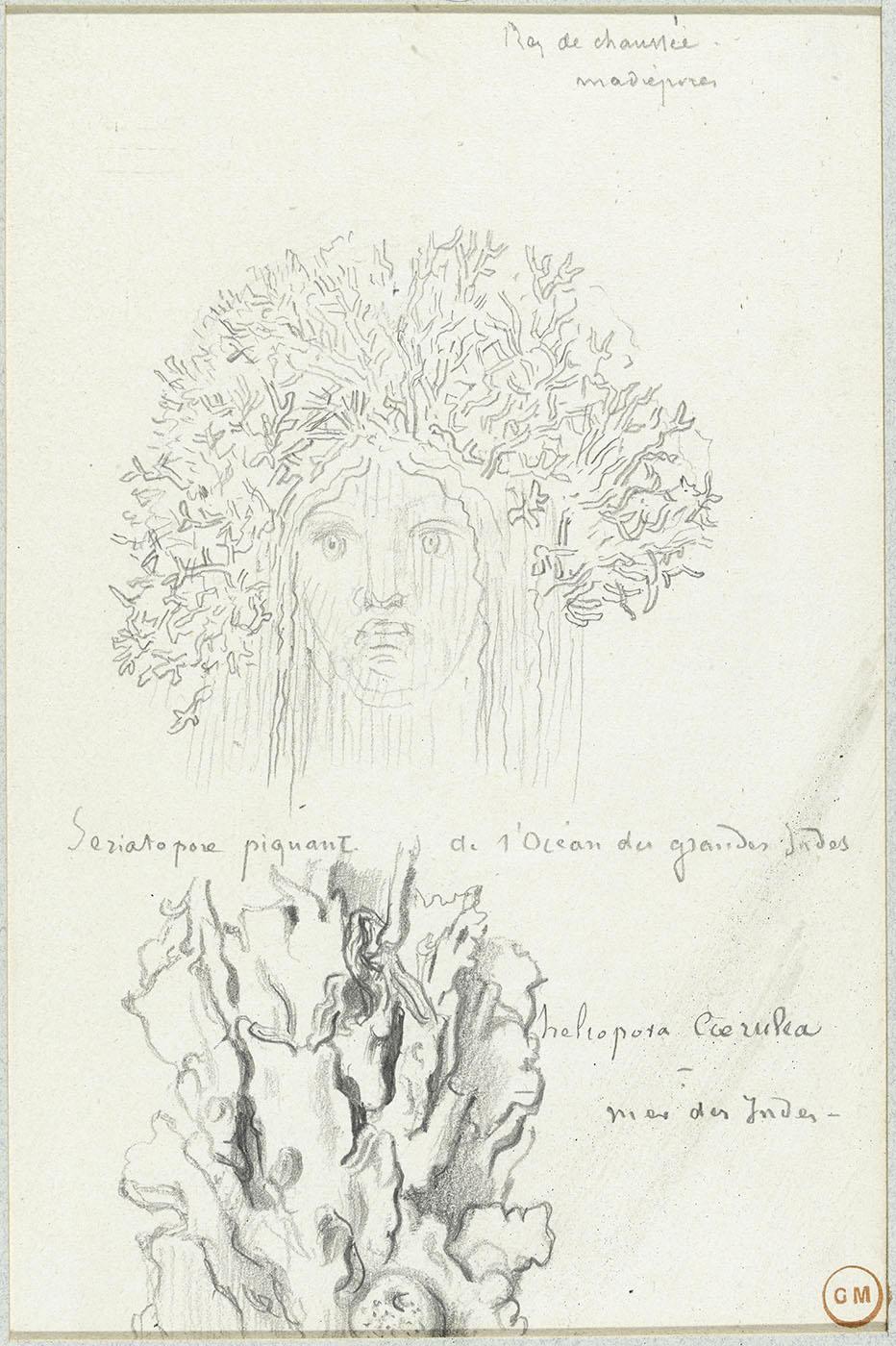 Tête de femme couronnée de corail, étude de corail (Heliopora coerulea)  H. 21,9 cm ; L. 14,3 cm (vue); Mine de plomb - Gustave Moreau