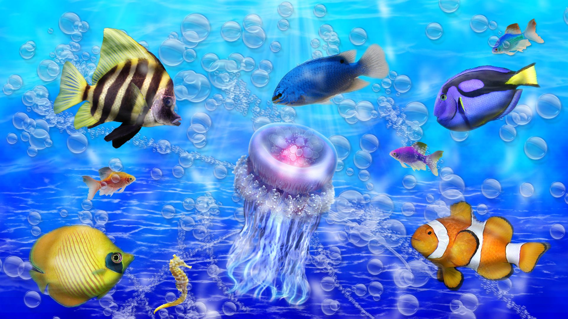 Pictures Of Ocean Fish Ocean In Color Beautiful Colorful Fish Jel 2394 Hd Fish Wallpaper Colorful Fish Fish Under The Sea