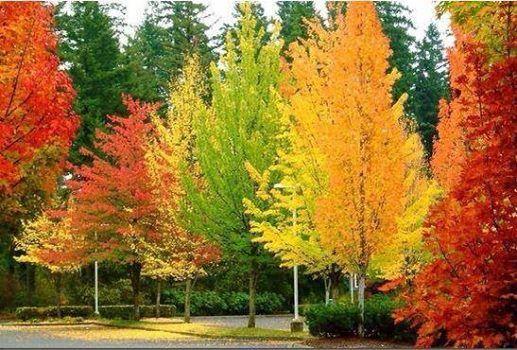 prachtige kleuren