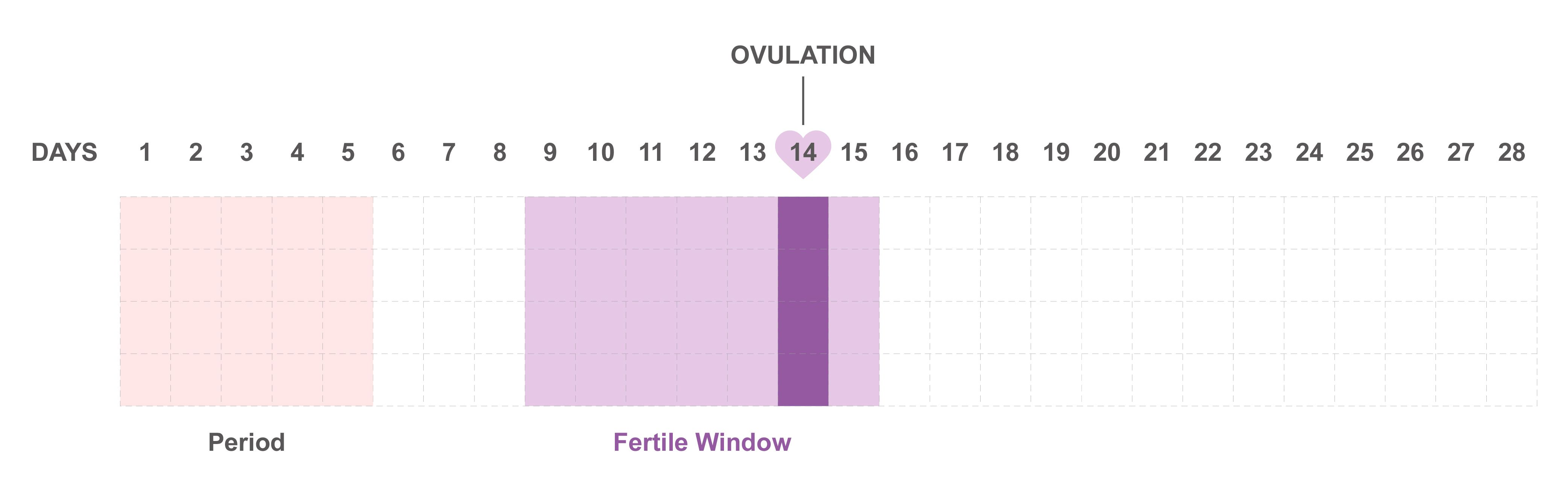 When Are Your Safe Days? NATURAL CONTRACEPTION BIRTH