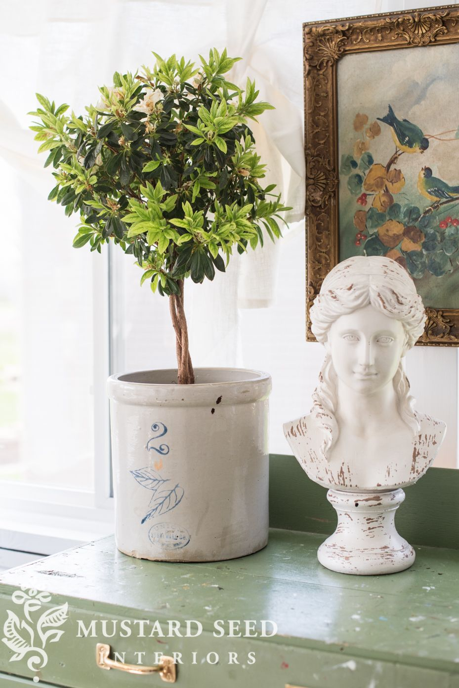 """a little """"spring cleaning"""" for my indoor plants Indoor"""