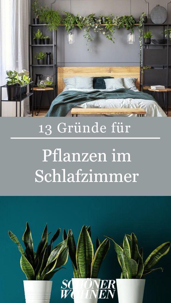 Sind Pflanzen die passenden Mitbewohner fürs Schlafzimmer? Und wie! Warum? Wir haben 13 Gründe, die für die grüne Oase im Schlafzimmer sprechen.   #schlafzimmer #pflanzen #einrichten #wohnen #gestalten #schlafen #ruhe #entspannung #pflanzenimschlafzimmer Sind Pflanzen die passenden Mitbewohner fürs Schlafzimmer? Und wie! Warum? Wir haben 13 Gründe, die für die grüne Oase im Schlafzimmer sprechen.   #schlafzimmer #pflanzen #einrichten #wohnen #gestalten #schlafen #ruhe #entspannung #pflan #pflanzenimschlafzimmer