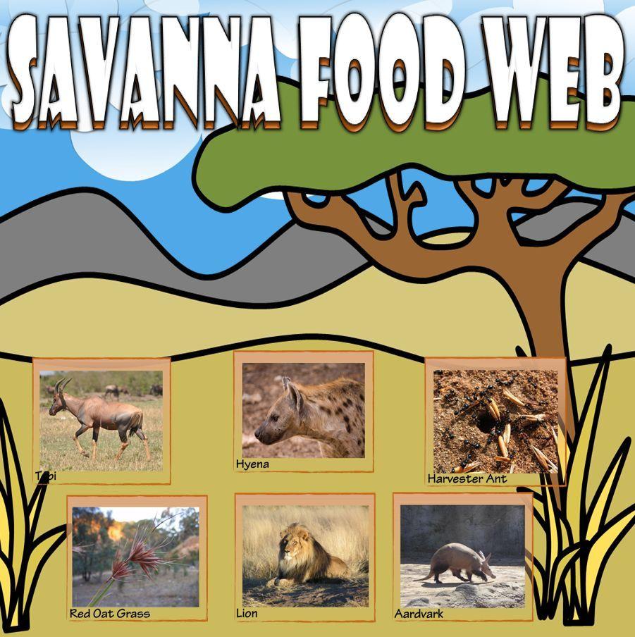 Food Chain and Food Web Savanna Card Sort Food chain