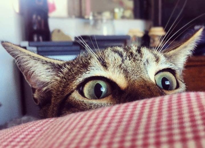 Yes!?! Gotcha!