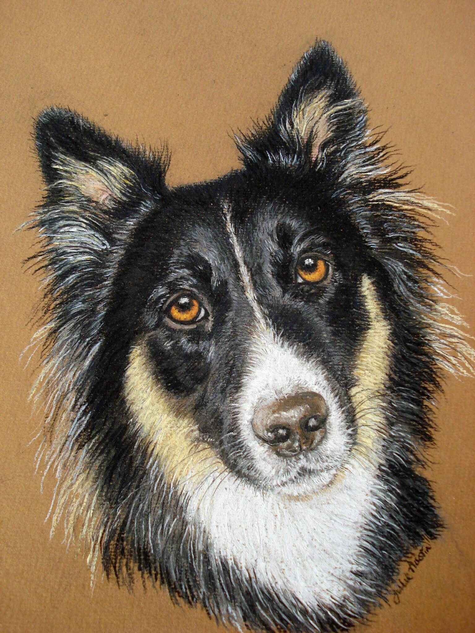 Husky Collie cross, pastel portrait   Portrait Paintings   Pinterest ...