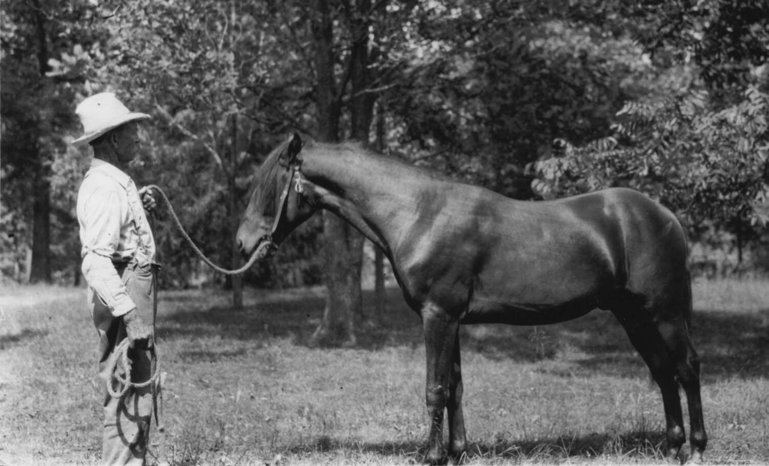 Almanzo with one of his Brown Morgans, Rocky Ridge Farm.