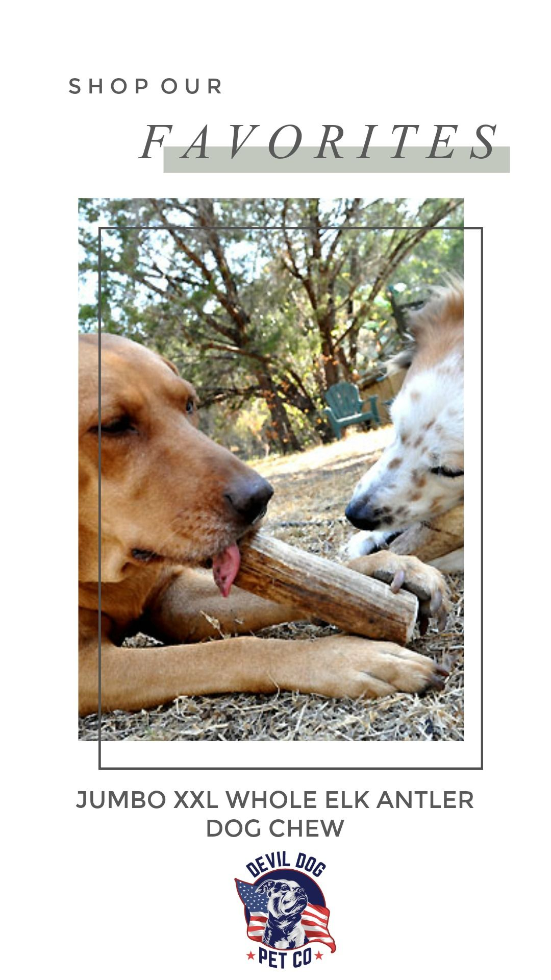 Jumbo Xxl Whole Elk Antler Dog Chew Antler Dog Chew Dog Chews Elk Antlers