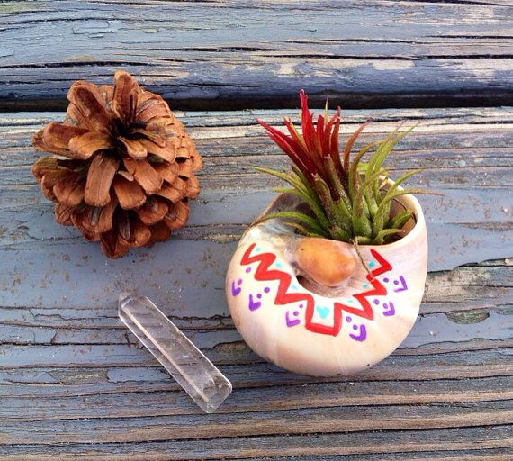 air plant in handpainted moon shell  by spinfiniteDesigns on Etsy, $11.00