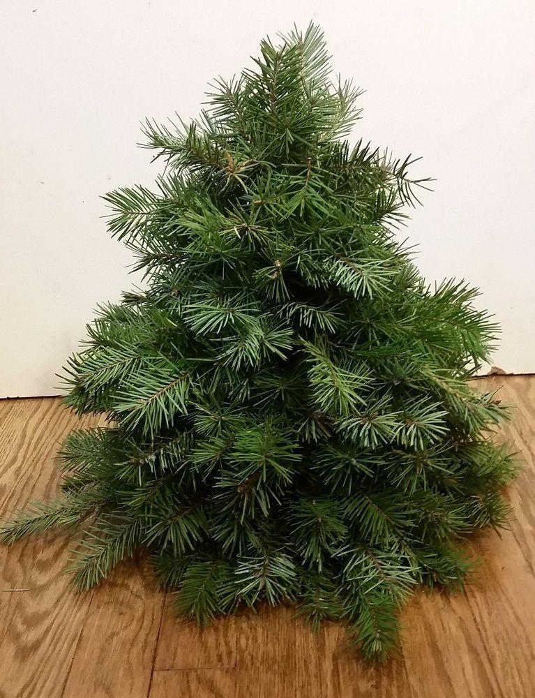 Make A Faux Diy Christmas Tree With Real Branches Faux Christmas Trees Diy Christmas Tree How To Make Christmas Tree