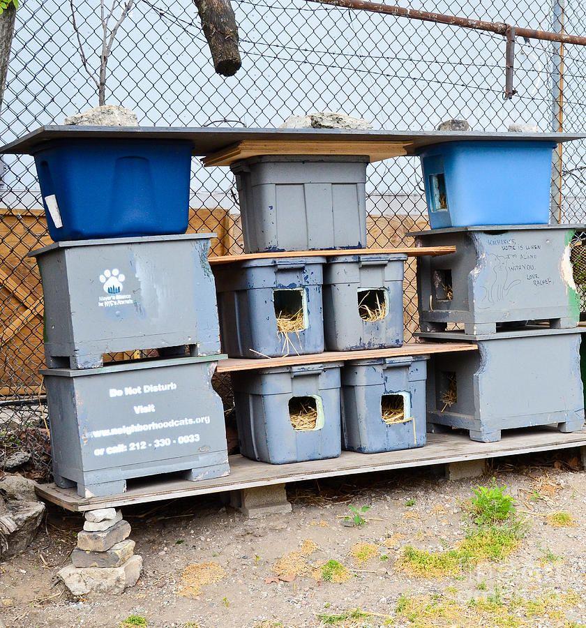 Feral Cat Shelter Feral cats, Feral cat shelter, Outdoor