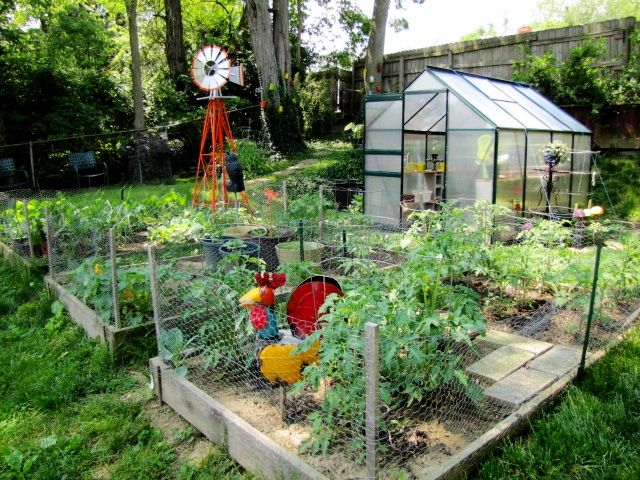 great layout idea for a small urban farm chicken coop