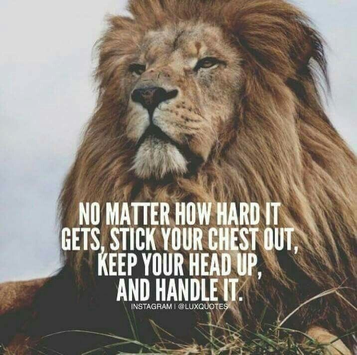 Motivational Quotes With Lion Images: Image Result For Lion Motivational Quotes