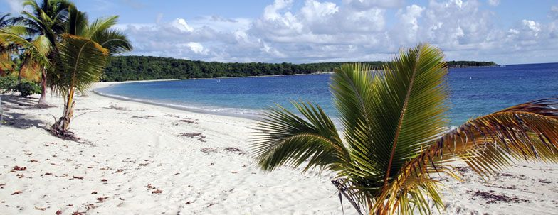 Camping in Vieques Vieques, Puerto rico, Outdoor