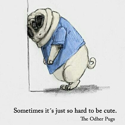 Its Not Easy Being So Cute Pugloveart Cute Pugs Pugs