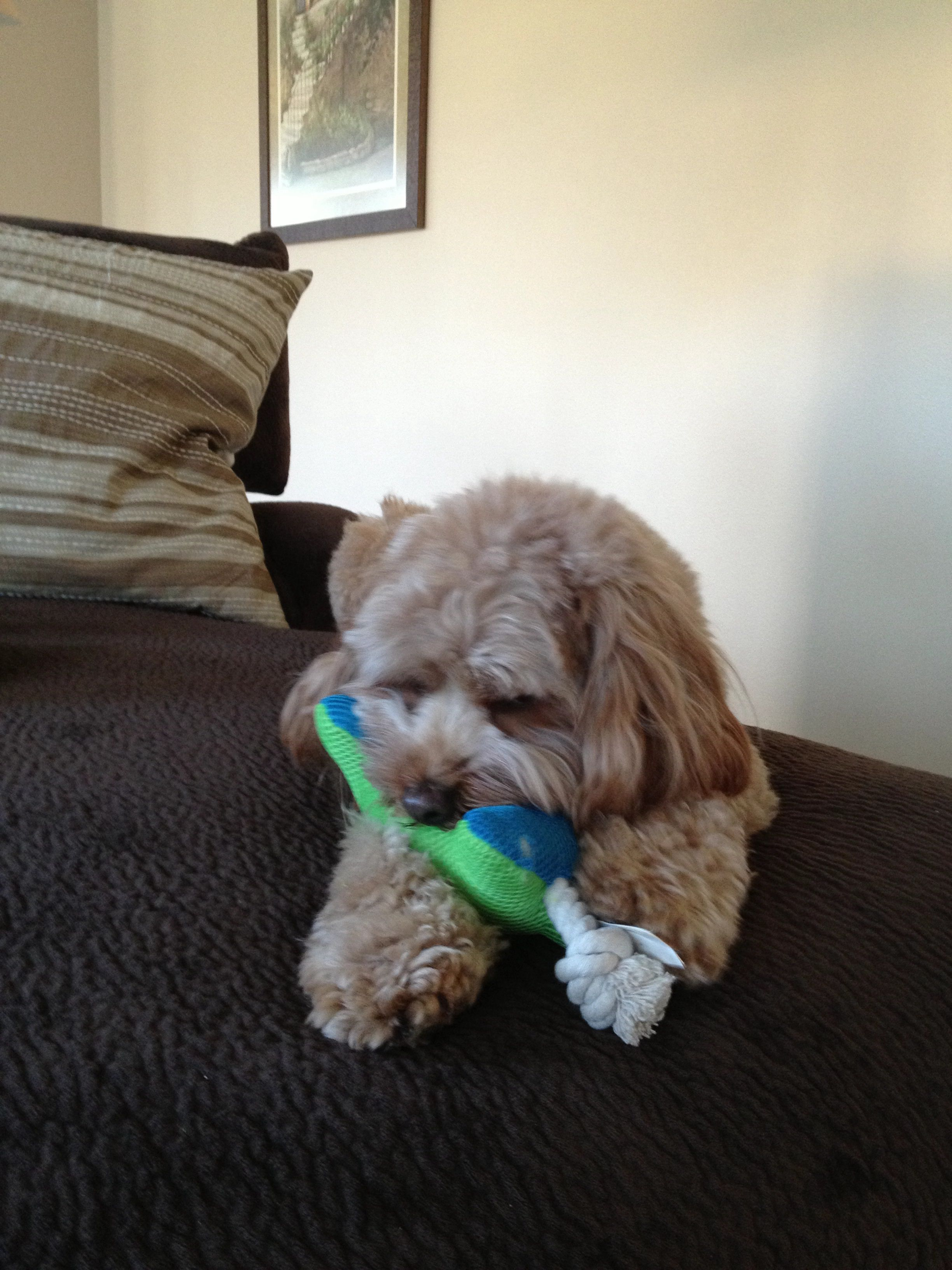 Playing with his bone