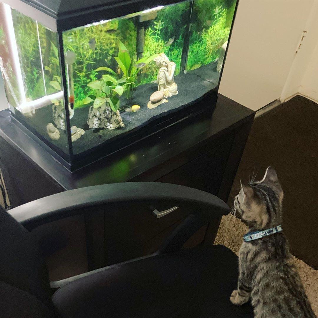 Kitty Meets Fish Tank Petfriends Kitten Aquarium Curiouskitten Kittensofinstagram Kittens Today Kittens Fish Tank Kitten Kittens