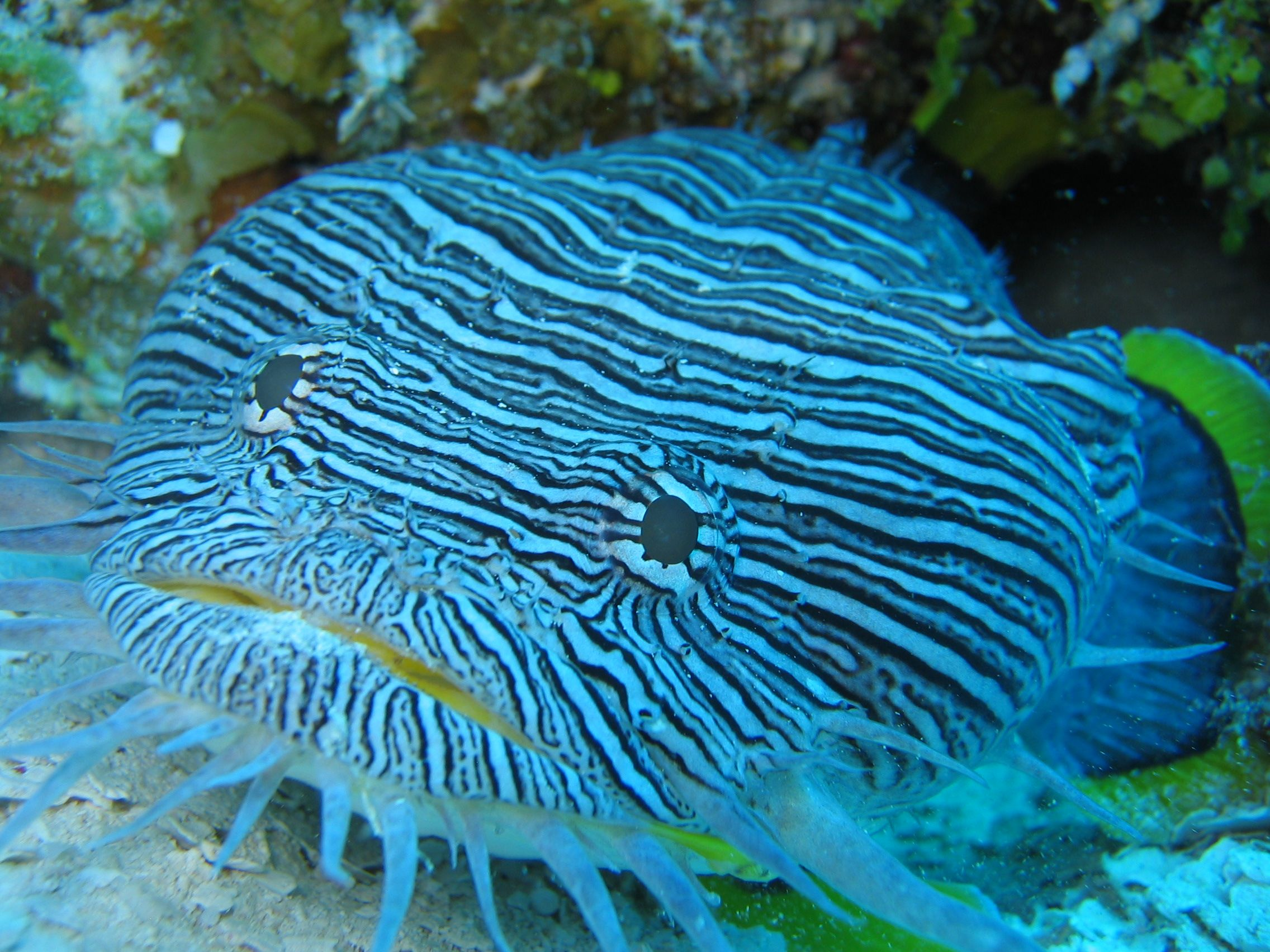 Cozumel Pro Dive Mexico Beautiful Sea Creatures Sea Fish Ocean Fishing