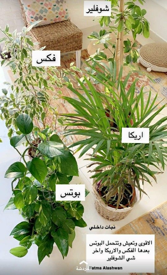 Pin By Sho33sho On Design House Plants Decor Plant Decor Indoor Plants