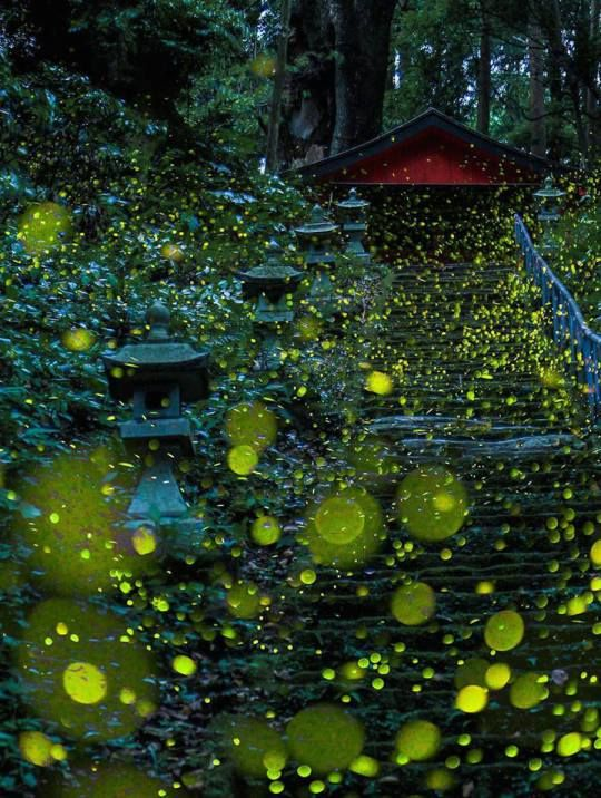 Gold Fireflies Dance Through Japanese Enchanted Forest