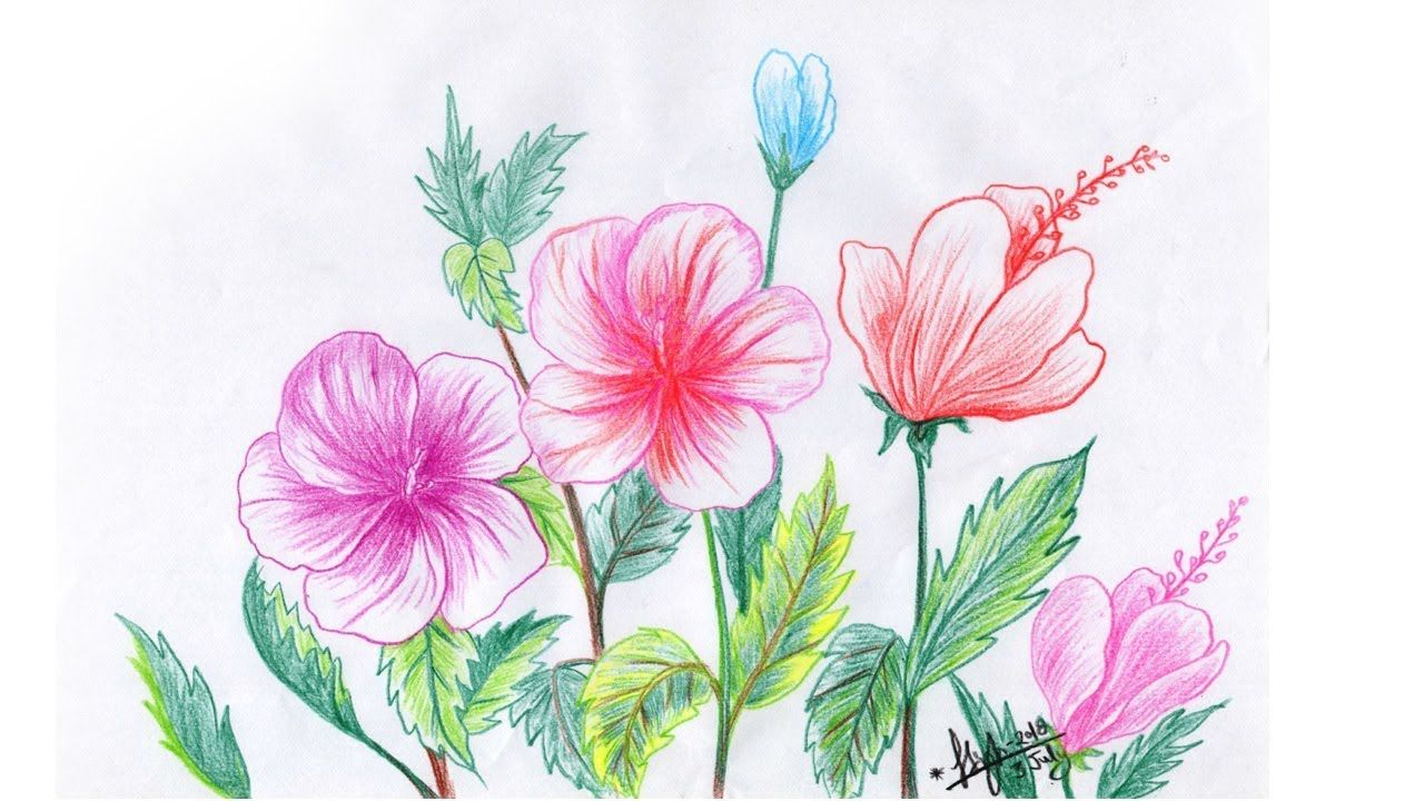 Image Wildlife A Chinese Rose Closeup Hibiscus Hibiscus Drawing Rose Line Art Flower Drawing