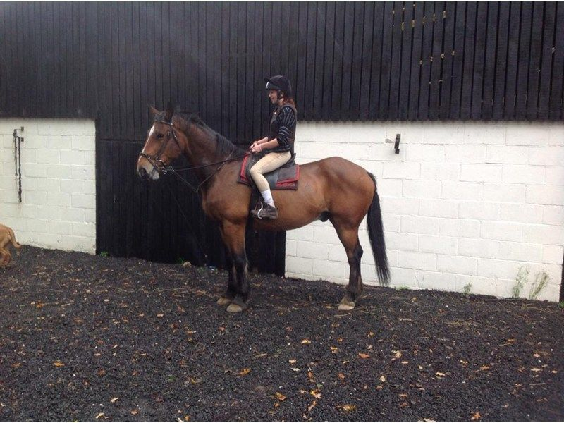 Mallie for sale | HorseDeals.co.uk
