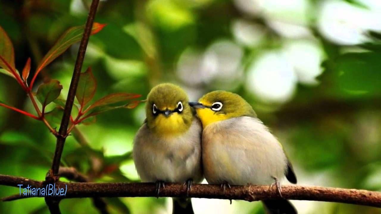 Secret Garden Poeme Pretty Birds Cute Birds Beautiful Birds