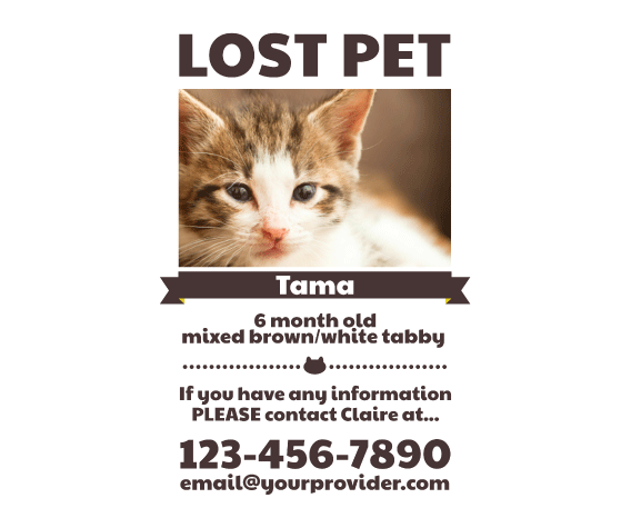 photograph relating to Printable Lost Pet Flyer titled Obtain this Missing Pet dog Flyer Template and other no cost