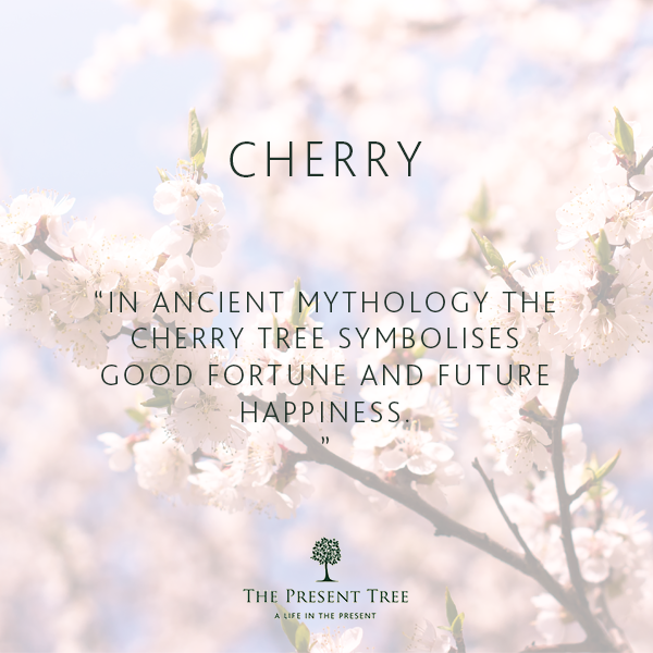 Cherry Tree Cherry Blossom Quotes Cherry Tree Blossom Quotes