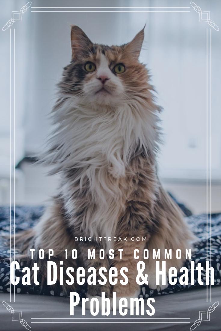 10 Common Cat Health Problems Cat Diseases Cat Health Problems Cat Illnesses