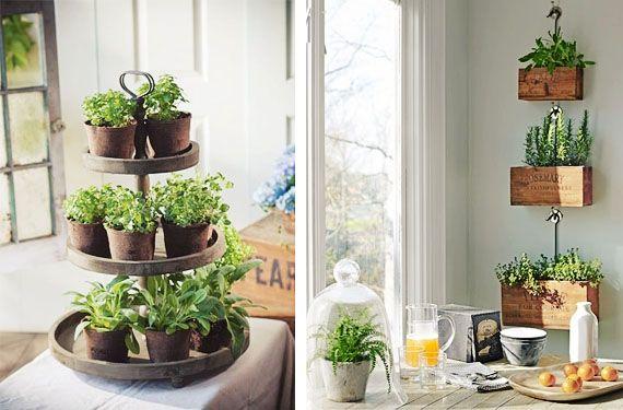 Imagen 11 especias hierbas y otros condimentos - Plantas aromaticas interior ...