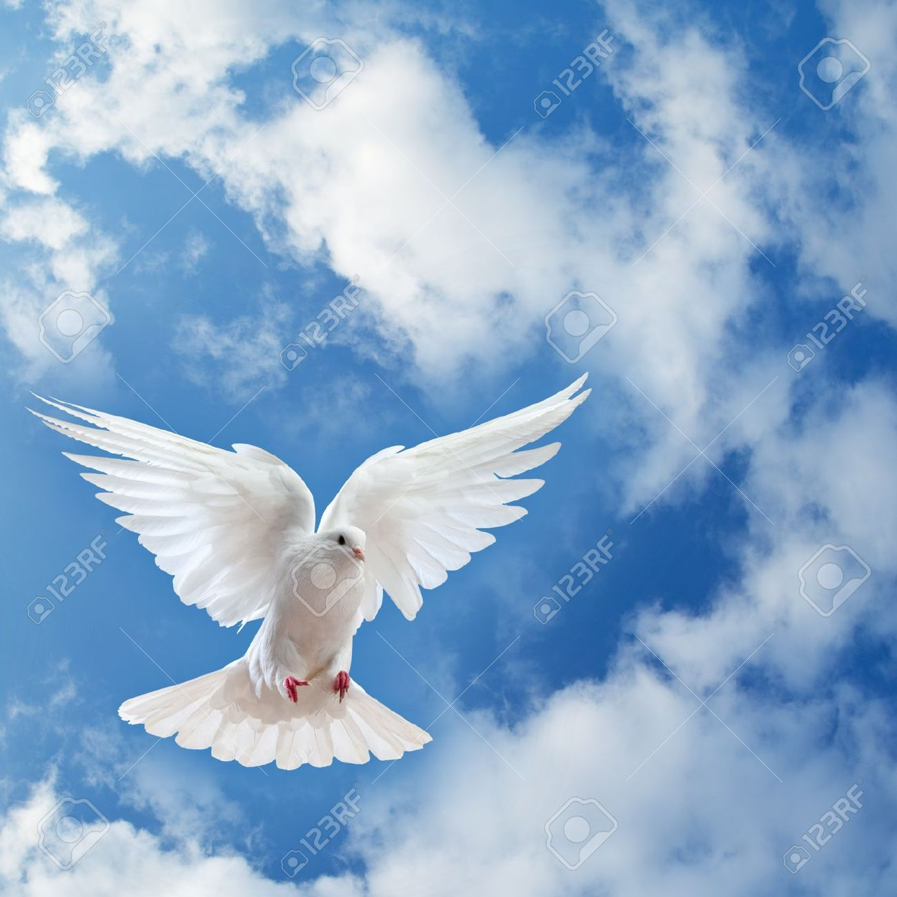 Dove In The Air With Wings Wide Open In Front Of