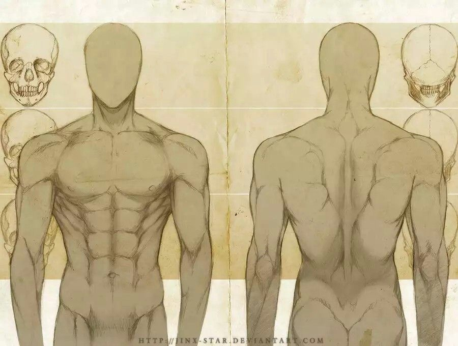 Front/Back male torso anatomy | Character References (n stuff ...