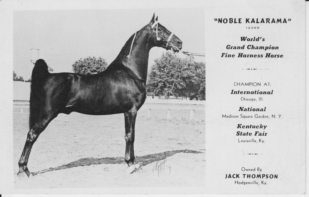 Noble Kalarama American Saddlebred Saddlebred Horses