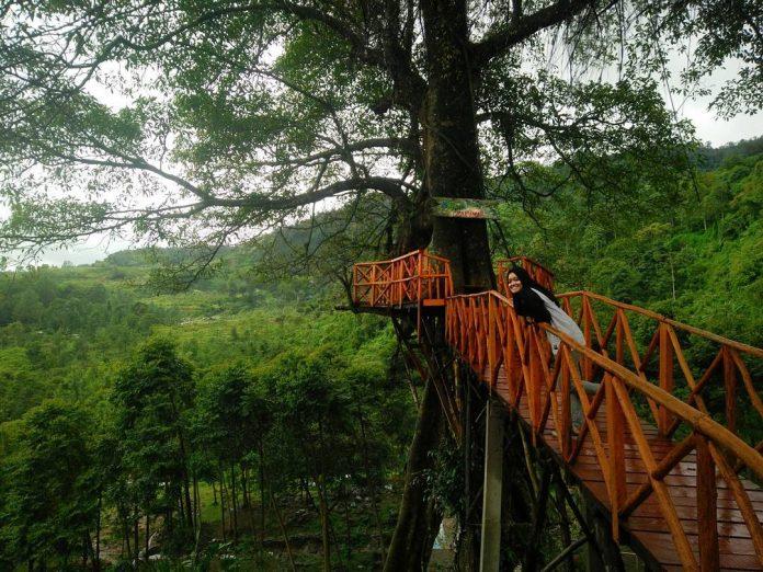 Rumah Pohon Curug Cipamingkis Di 2020 Kota Bogor Rumah Pohon Siklus Air