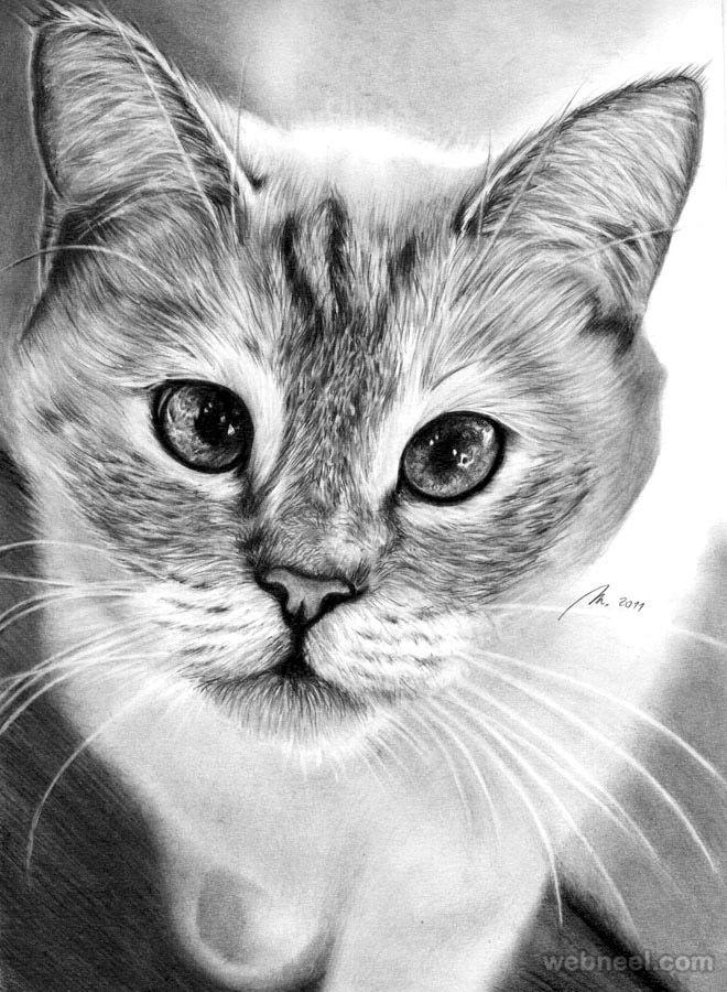 Картинки рисунков кошки
