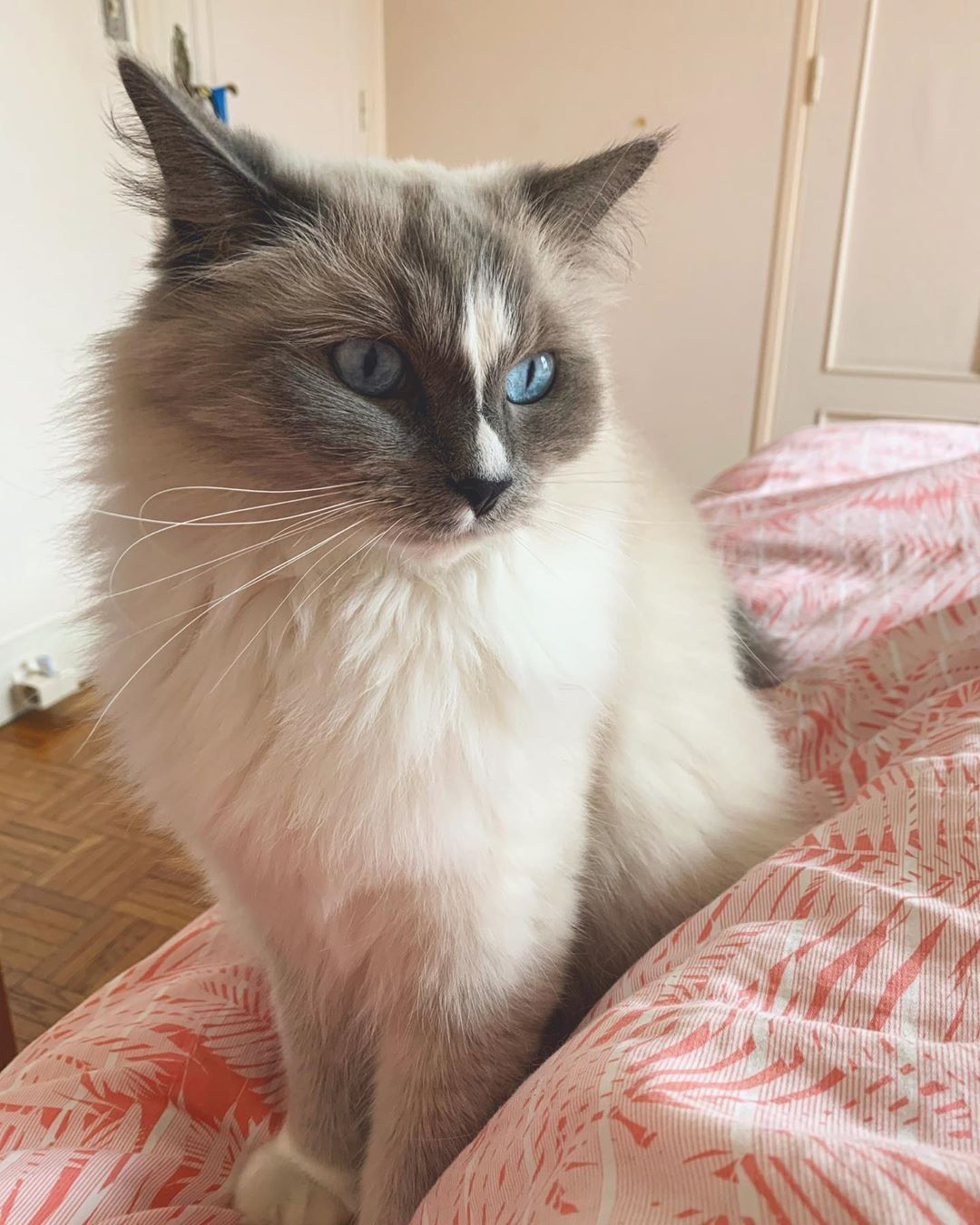 Top 10 Most Beautiful Cat Breeds In The World In 2020 Most