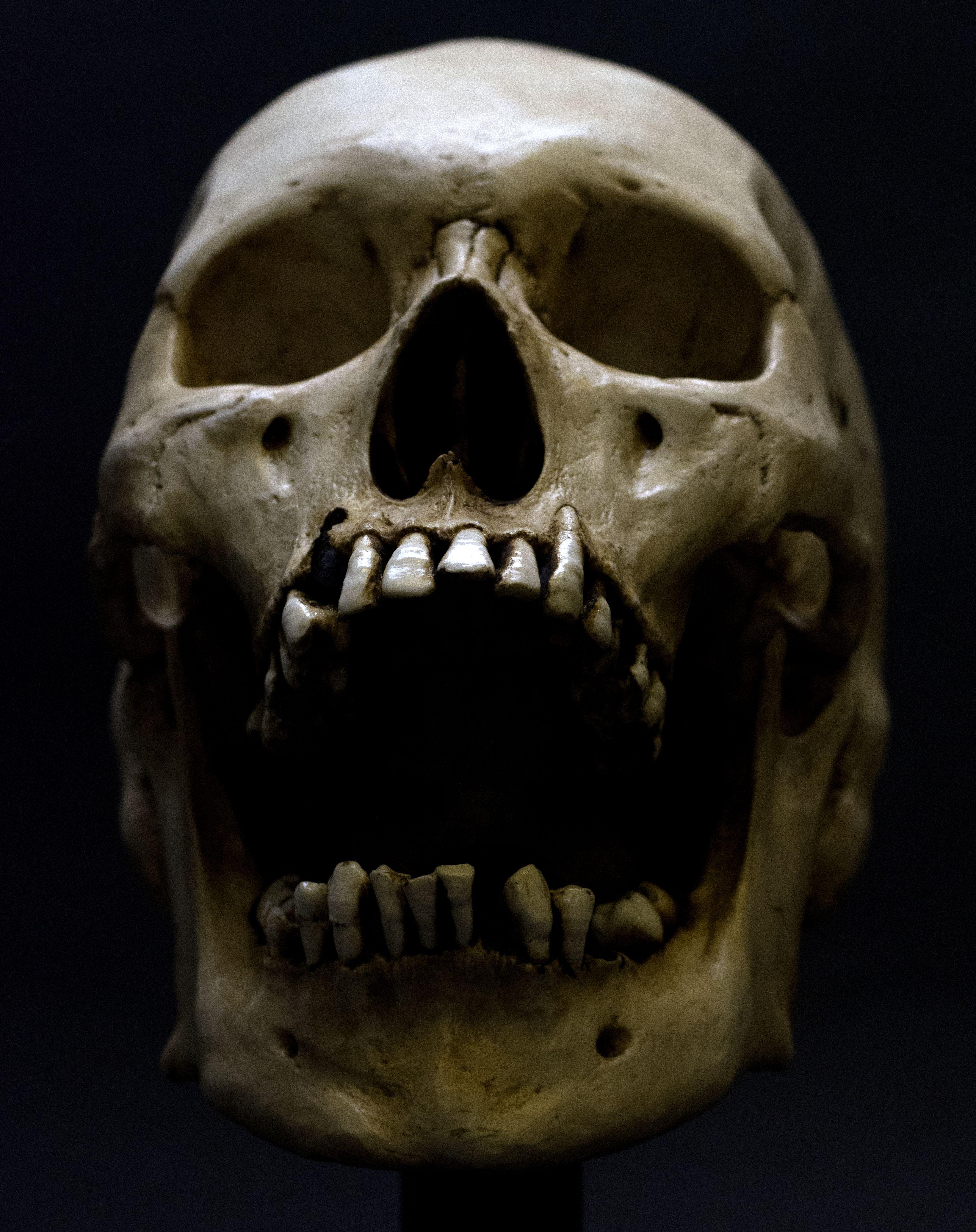Bildergebnis Fur Skull Craneos Y Calaveras Craneo Calaveras