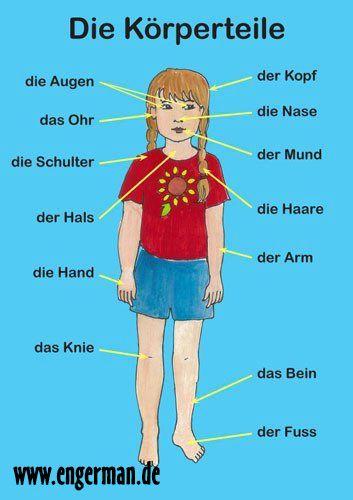 Die Koerperteile www.engerman.de | German Vocabulary Trainer ...