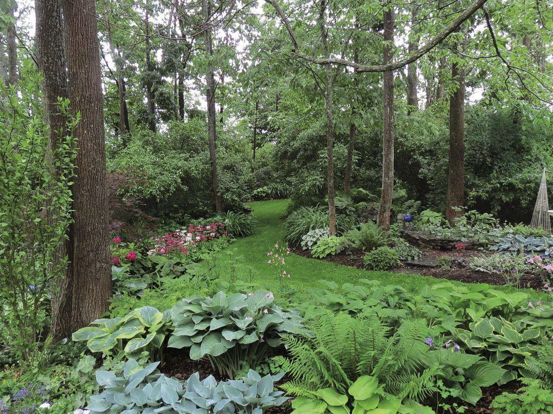 A Woodland Garden Design Finegardening Woodland Garden Woodland Plants Garden Design