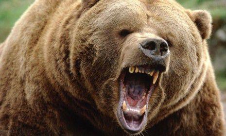 scary grizzly bear | grizzly bear japan attack | House of Drottinn ...