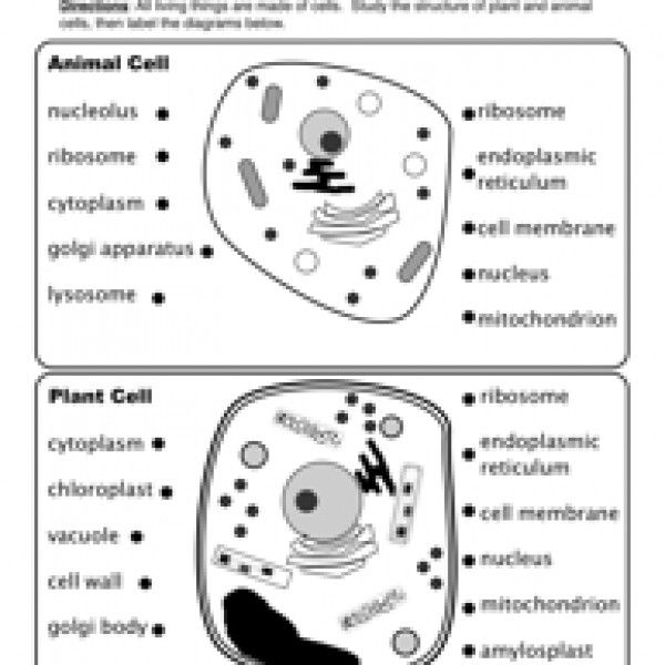 Animal And Plant Cells Worksheet With Images Plant Cells