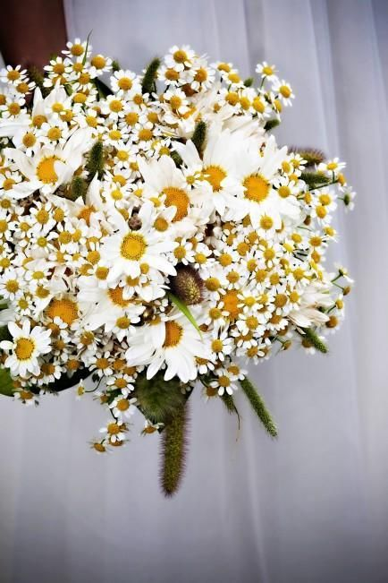 chamomile & daisy bouquets- with burlap, yellow or white stem wrap