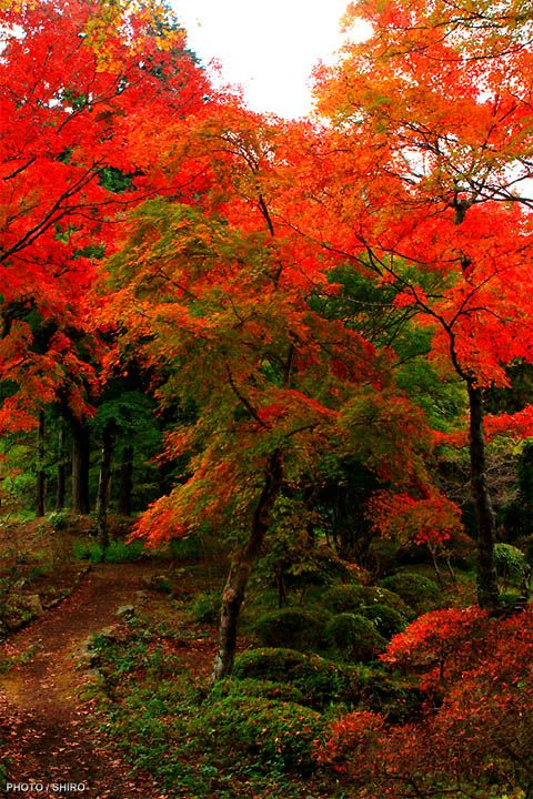 Witness the supernatural beauty of Japanese landscape Autumn in Japan.